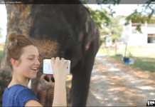 Un stylet, un Galaxy Note et un éléphant : buzz sur le net