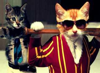 Journée internationale du chat : les meilleurs lolcats sur tablette ! 6