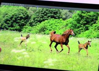 Cette vidéo va vous couper le souffle : Adobe image l'avenir des applications 2